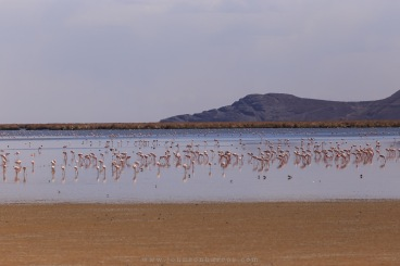 Flamingos no lago Uhu Uhu