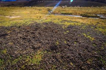 Pelotinhas deixadas pelas lhamas