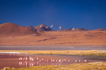Flamingos habitam a Laguna Colorada.
