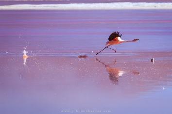 Decolagem de um Flamingo